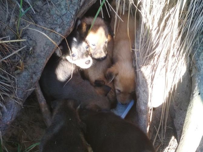 В Брянске ищут хозяев живущим в корнях деревьев щенкам