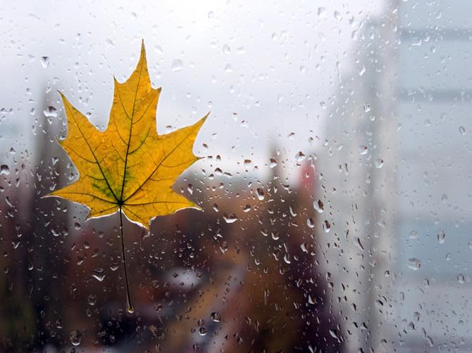 Брянцев в субботу ждет теплая и дождливая погода