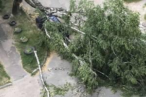 В Брянске ураганный ветер повалил шесть деревьев