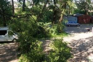 В Брянске аварийное дерево упало на три припаркованные машины