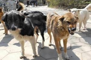 В Комаричском районе участились нападения собак на людей
