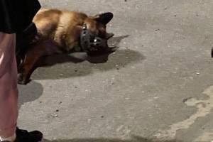 В Брянске на проспекте Московском таксист сбил собаку и скрылся