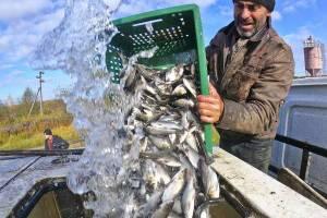 В брянское озеро ДСК выпустили 258 килограммов толстолобика