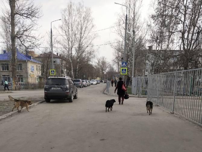 В Брянске бродячие собаки атаковали школу №55