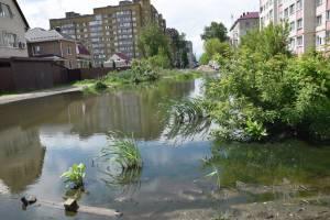В Брянске на легендарной луже по улице Медведева зашумел камыш