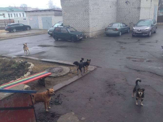 В Клинцах бродячие псы атаковали подъезд жилого дома