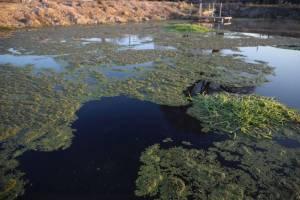 Жители Клинцов просят очистить заросшую ряской криницу