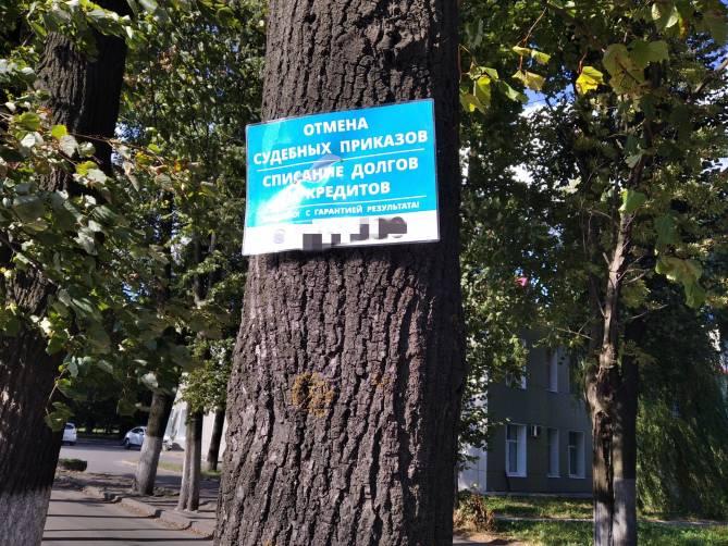 В Брянске деревья страдают от бездействий властей