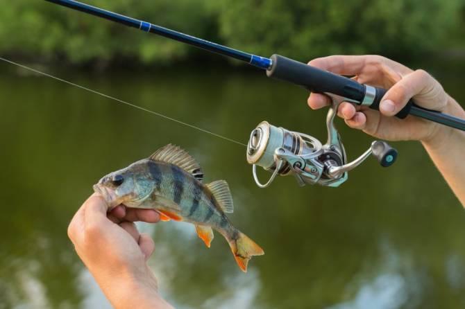 Брянцев позвали на чемпионат по рыболовному спорту