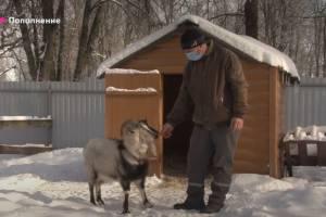 В брянском зоопарке появились две овцы и козел