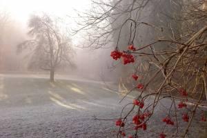 На Брянщину во вторник придут заморозки