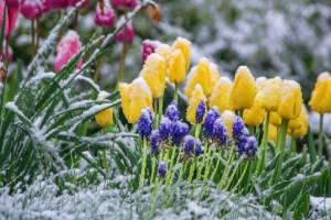 В Брянской области утром 13 мая ожидаются заморозки