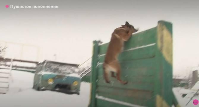 Брянские кинологи УФСИН получили 6 новых собак