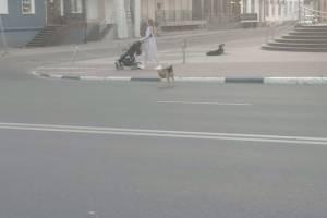 Власти Брянска проигнорировали напавшую на блогера стаю собак