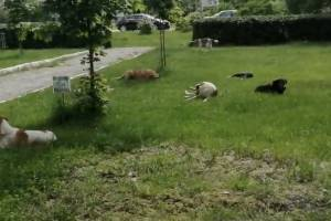 В Брянске бродячие собаки оккупировали Фокинскую администрацию