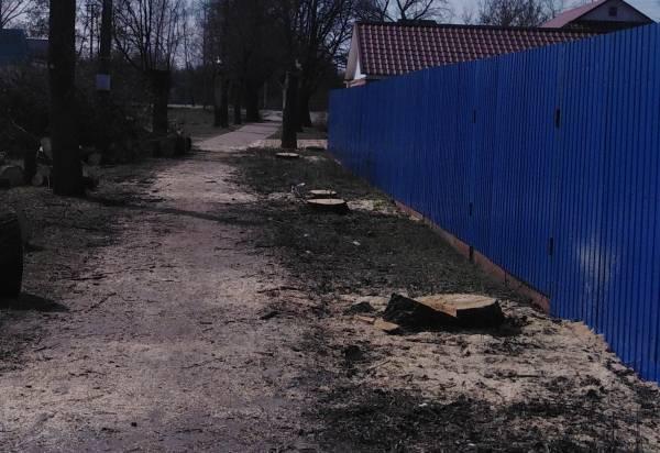 В Суземке спилили грозившие рухнуть на дом пенсионерки старые деревья