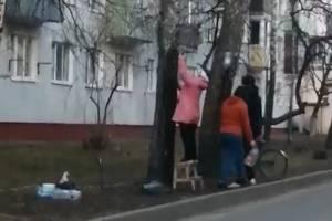 Жительницу Клинцов шокировали добытчики березового сока