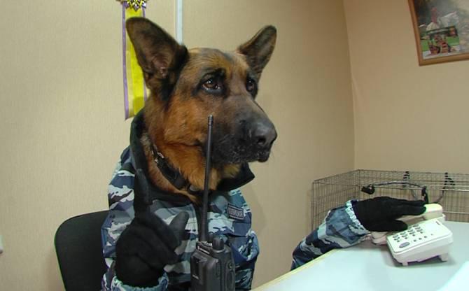 В Брянске владельцев собак предупредили о телефонных мошенниках