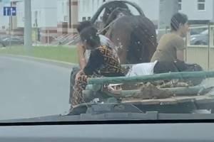 В Брянске на новой дороге заметили «цыганскую маршрутку»