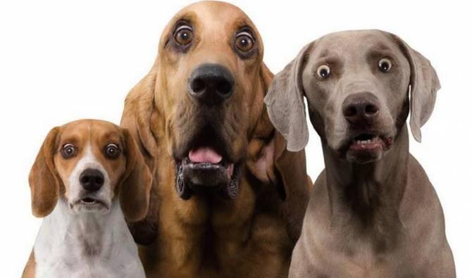В Брянске девушка пригрозила расправой над бродячими собаками
