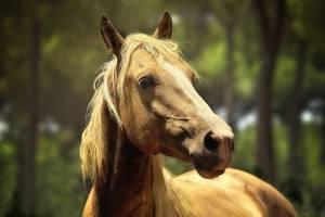 В брянском селе Тростань лошадь провалилась в колодец