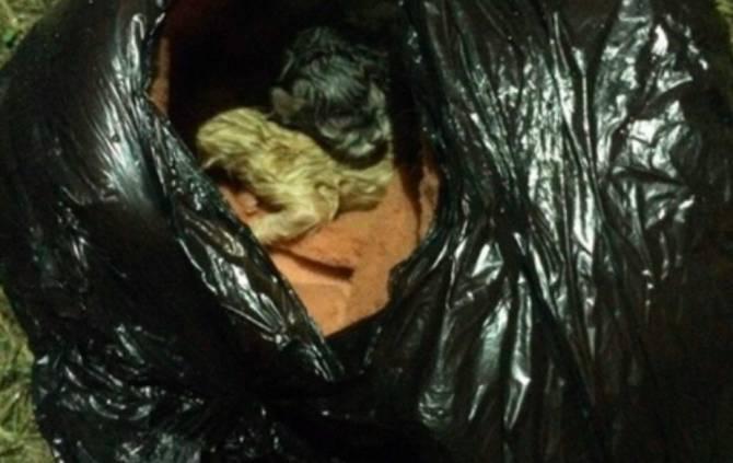 В Сельцо семья живодёров выкинула в речку пакет с котятами