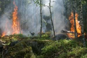С начала года в Брянской области зарегистрировано 175 лесных пожаров
