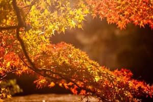 Брянцев пригласили на «Бал осенних листьев»
