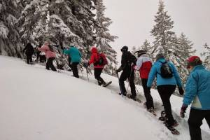 Брянцев пригласили в поход по зимнему лесу