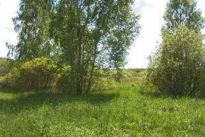 В Жирятинском районе землевладелицу оштрафовали на 10 тысяч рублей
