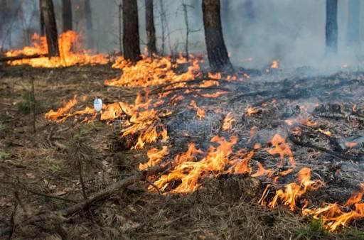 На Брянщине с начала года потушили 89 лесных пожаров