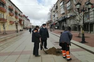 В Брянске к уборке улиц подключили осужденных