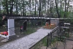 В Брянске на кладбище по улице Почтовой упало дерево