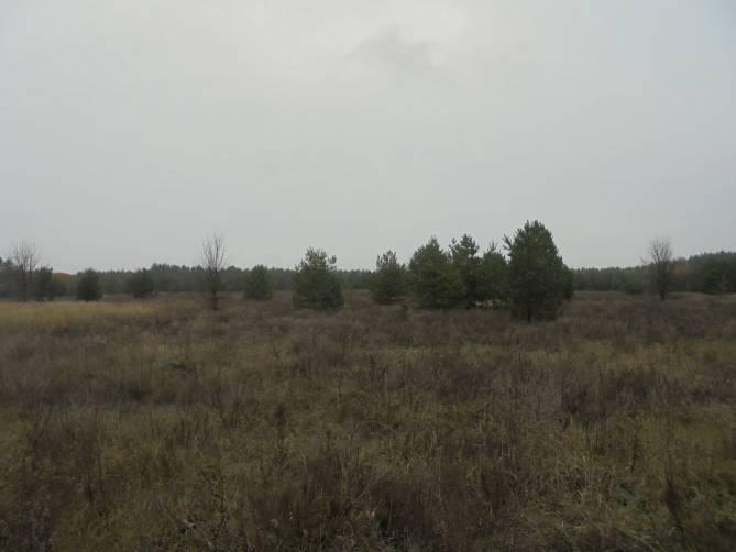 В Суземском районе нерадивый собственник лишился 8,6 гектаров земли