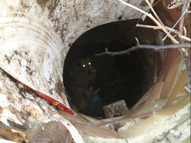 Жители Брянска пытаются спасти упавшую в люк собаку