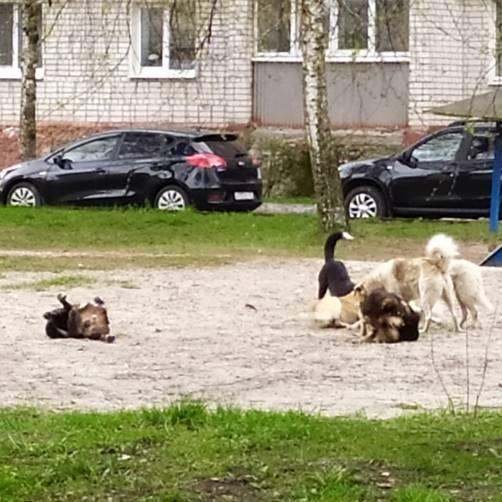 В Брянске стая бродячих собак захватила детскую площадку