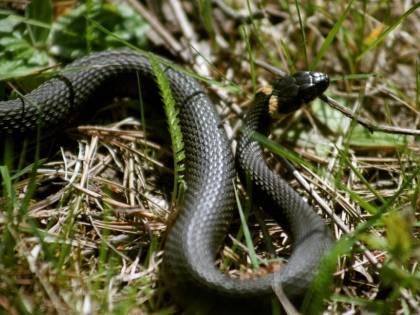Брянск атаковали змеи