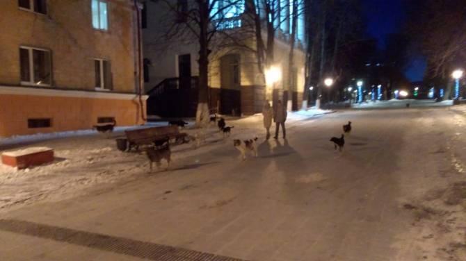 В Брянске на бульваре Гагарина свора псов атаковала прохожих