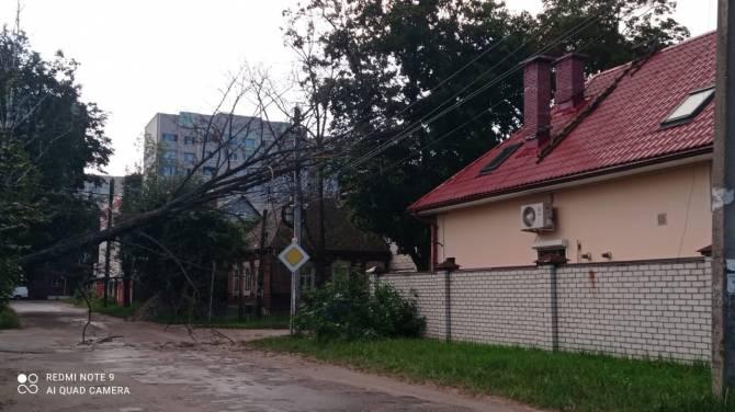 В Фокинском районе Брянска повисшее на проводах дерево перегородило дорогу