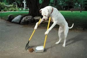 Пожалуйста, убирайте за своими собаками и не отпускайте их с поводка