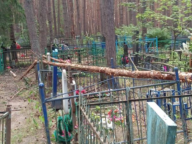 Брянцы рассказали о поваленных деревьях на старом кладбище