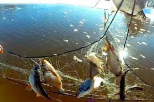 В Выгоничах осудят выловившего сетями 93 рыбы браконьера