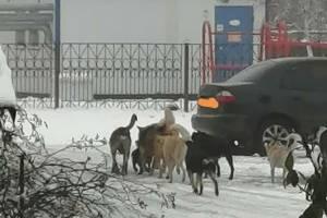 Стая бродячих собак оккупировала центр посёлка Локоть