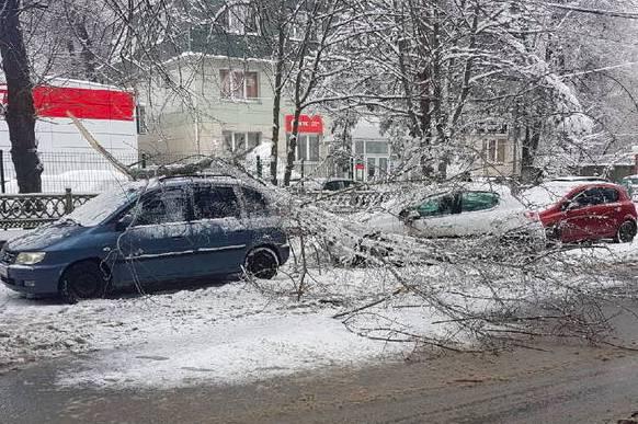 В Брянске из-за снегопада машины завалило ветками деревьев