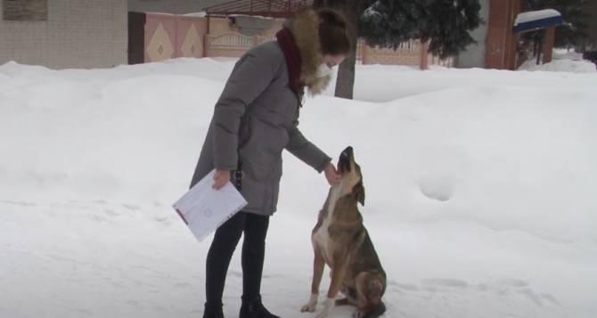В Карачеве бродячие собаки покусали двоих детей