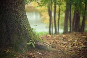 На восстановление лесов Брянщины потратят 60 миллионов рублей