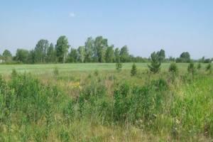В Навлинском районе собственник сельхозугодий допустил зарастание сорняками 75,6 га