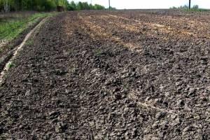 В Навлинском районе спасли от зарастания 9 гектаров земли