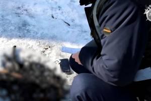 В Брянске опубликовали видео с места сожжения грудного ребенка в лесу