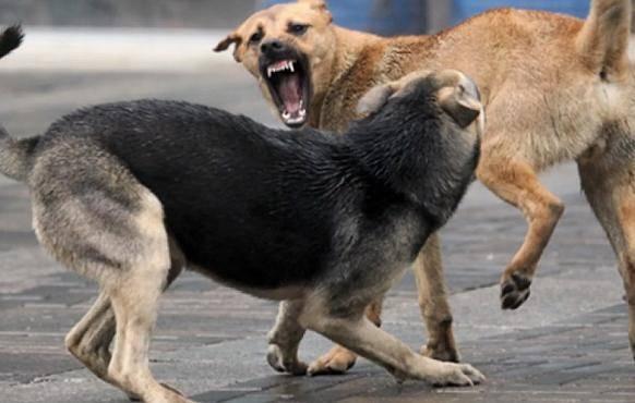 Жительницу Брянска в парке атаковали агрессивные собаки